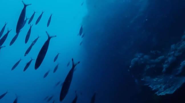 AQUASOJA Fishfeed prodution policy: